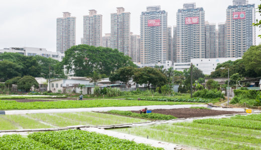 Ningbo soil fertility project: Enhancing soil Fertility and improving ecosystem services for peri-urban agriculture in China