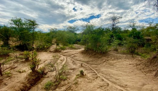 Restoring African degraded landscapes with plant biodiversity and livestock management