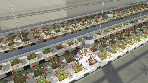 Ubiquitous and synchronous 'Roots and Shoots' imaging for phenotyping and controlled environment agriculture webinar