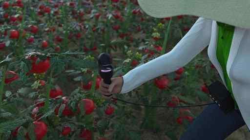 Portable plant diagnostics
