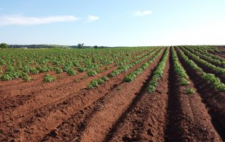 Integrated pest management and the future of farming