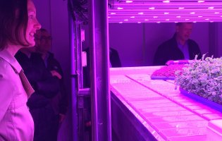 The Vertical Farming Conundrum; Will this solution ever ascend?