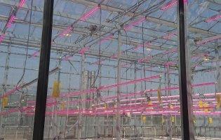 Urban Agriculture Cluster Innovation Visit