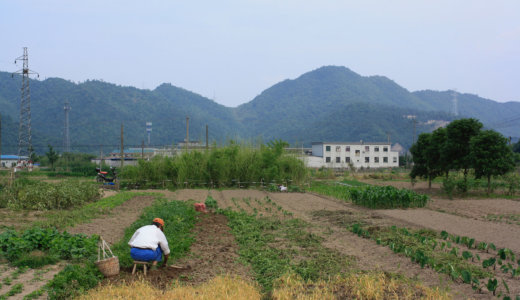 Using Critical Zone Science to Enhance Soil Fertility and Improve Ecosystem services for Peri-Urban Agriculture in China