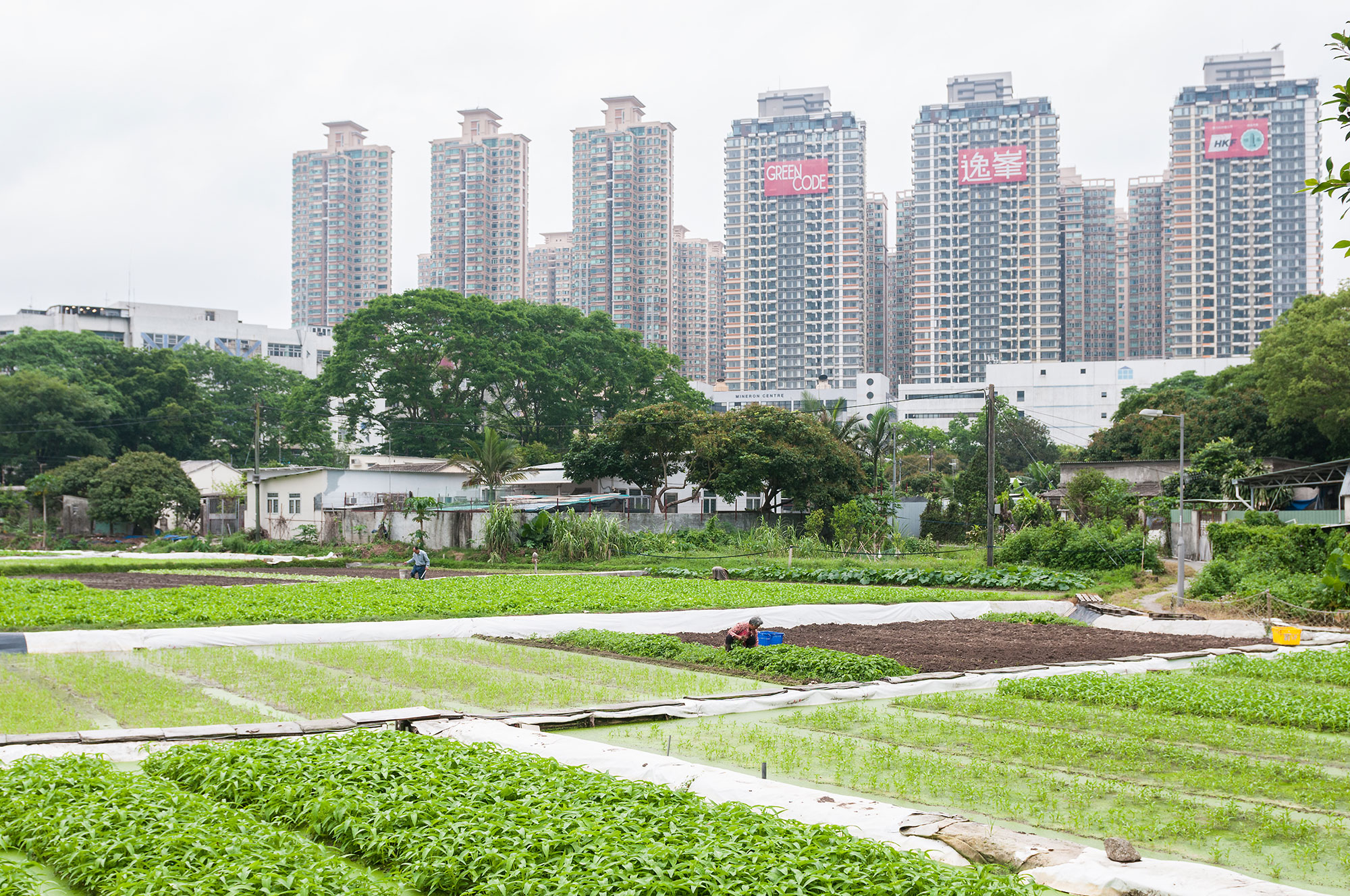 N8 AgriFood international: the next steps for collaboration with China and USA