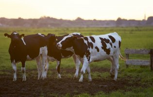The Resilient Dairy Landscapes project: nature-based solutions to the challenges posed by Brexit