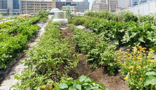 Resource Use Efficiency in Urban Agriculture webinar